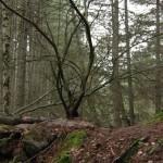 Talitha Luke-Eardley - Camino Sangriento 6 - 07