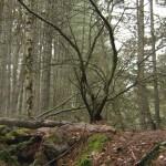 Talitha Luke-Eardley - Camino Sangriento 6 - 08